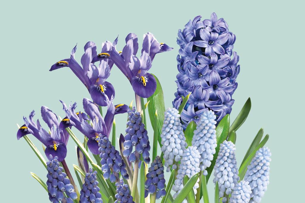 Kleur je tuin blauw